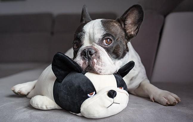 cachorro com brinquedo de pelúcia